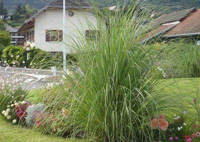 Fleurissement graminée : Muscanthus