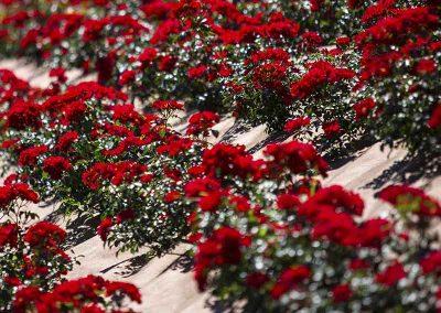 Fleurissement sur bâche