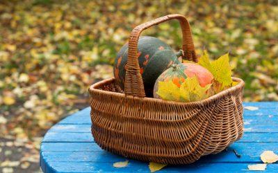 La dernière récolte au potager en Novembre