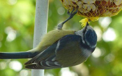 Des oiseaux dans votre jardin en hiver
