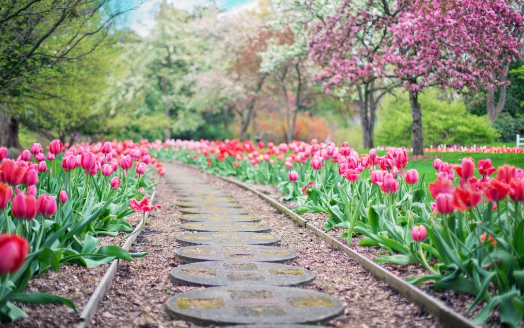 Cheminons dans le jardin