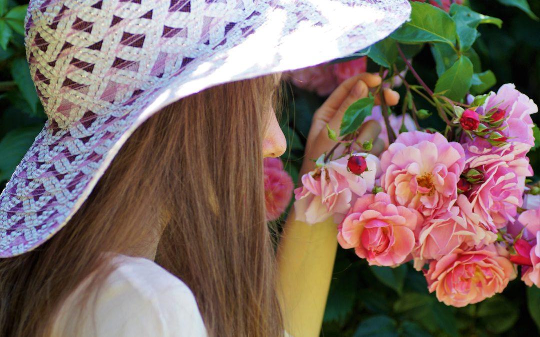 Février, le temps de tailler les rosiers