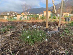 Jardins familiaux humus sapiens gonthier challes les eaux